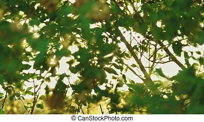 Sun blinking in the swaying elm branches in slow motion