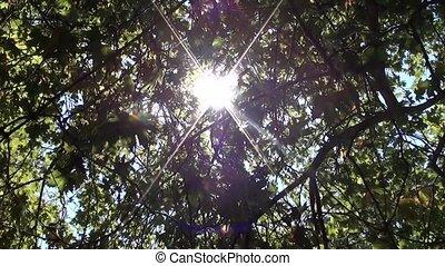 Sun breaking through foliage