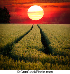Sun Burn - Double-exposure image of the Sun and a field. Two...
