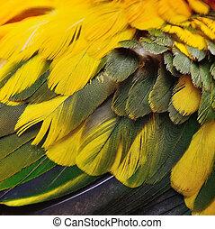 Sun Conure feathers - Colorful bird feathers, Sun Conure...