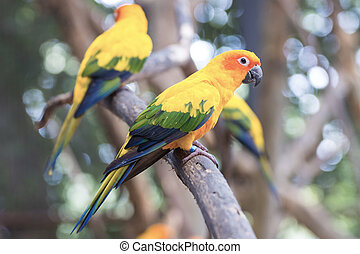Sun Conure Parrots Beautiful Parrot on branch of tree