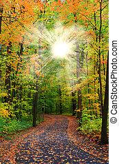 Sun flare through autumn trees and bike path