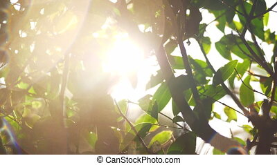 Sun flecks and wet tree after watering - Wet tree branches...