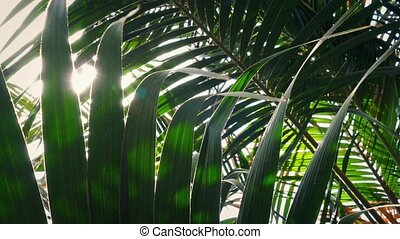 Sun Flickers Through Lush Tropical Rainforest - Tracking...