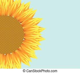Sun flower illustration with pattern