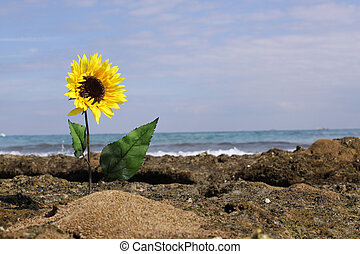 Sun Flower Reef (landscape) - A lush sunflower coming up out...
