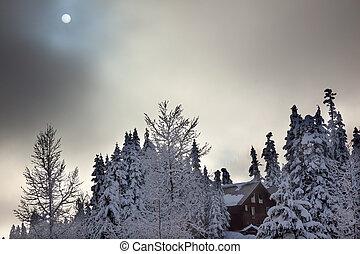 Sun Fog Snow Covered Trees on Snow Mountain at Snoqualme Pass Washington.