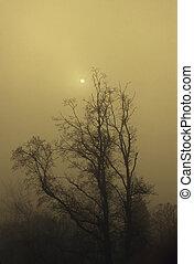 Sun in fog