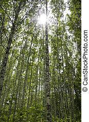 sun in the forest scene