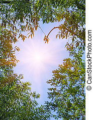 sun in the sky, surrounded by branches with leaves