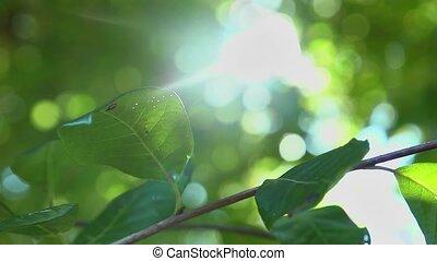 sun kissed leaf