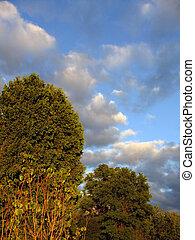 Sun Kissed Trees