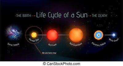 Sun life cycle vector