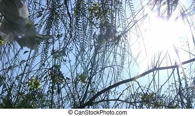 Sun light and tree leaves