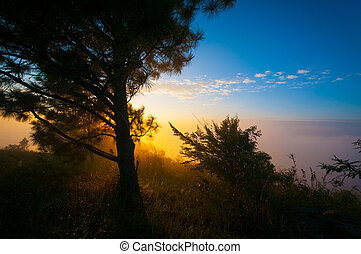 sun light effect and tree pine in the mountain