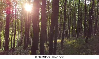 Sun light is shining in green forest landscape. Pan - moving from left to the right between trees.