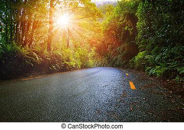 sun light in moisture mountain rain forest perspective asphalt road