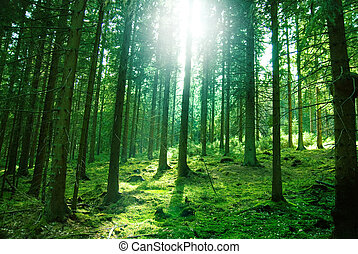 Sun light in the forest