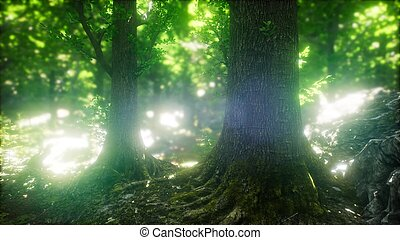 Sun Light in the Green Forest