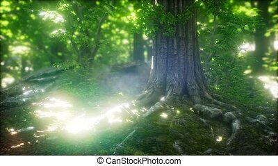 Sun Light in the Green Forest - morning sun light in the...