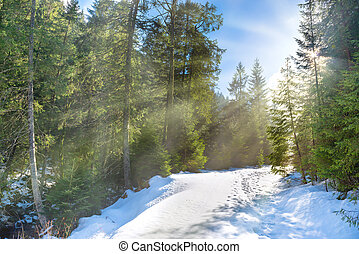 Sun light in the winter forest