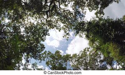 Sun light through jungle trees, steadicam shot