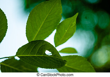 Sun light through the foliage in soft selective focus against background of blurry foliage and blue sky. Close up funny muzzle animal hare or cat from branch with green leaves. Place for your text.
