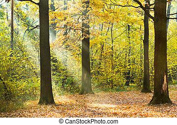 sun lit lawn in autumn forest