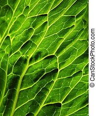 Sun lit leaf