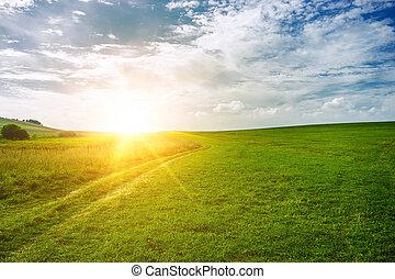 sun near the horizon and green field of grass