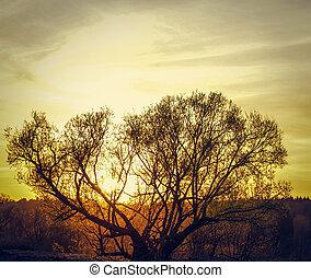 sun on a tree