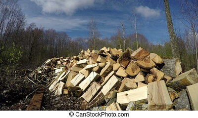 Sun on big heap of cut firewood, time lapse 4K
