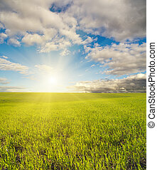 sun over green field