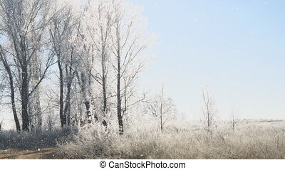 Sun over Meadows, bushes and trees covered with frost....