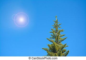 sun over the pine
