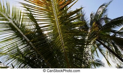 Sun over the Tropical Coconut Palm Tree. Slow Motion.