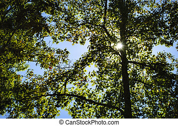 Sun peeking through tree branches