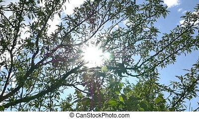 sun ray tree