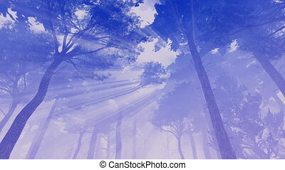 Sun rays and hazy pine crowns 4K - Dreamlike woodland...
