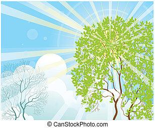 Sun rays and tree