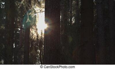 Sun rays break through the trees