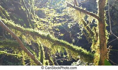 Sun rays forest green - Enchanting sun rays beautifully...
