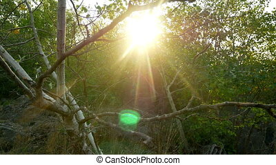 Sun rays forest nature