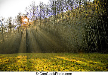 sun rays in a forest