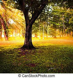 Sun rays in autumn forest.