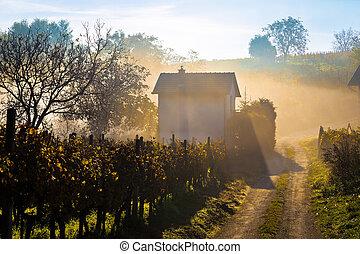 Sun rays in morning fog vineyard view, Prigorje region of...