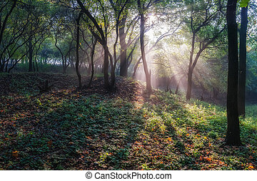 Sun Rays in Quiet Forest