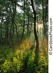 Sun rays in spring forest