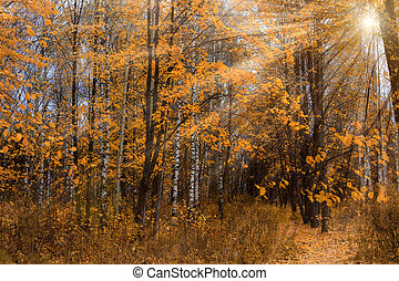 Sun rays in the autumn forest