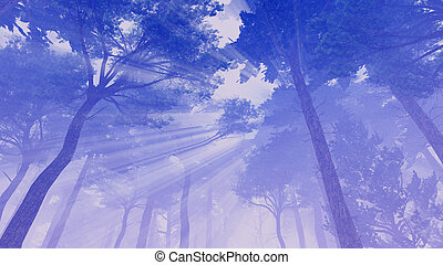 Sun rays in the crowns of pines